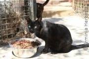 Mallorca – ein etwas anderer Reisebericht | Tierarztpraxis-Hanau.de