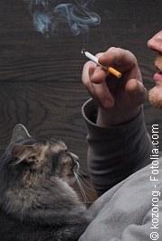 rauchende Katzen | Tierarztpraxis-Hanau.de