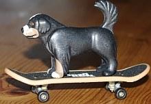 Ein Hund auf einem Skateboard | Tierarztpraxis-Hanau.de