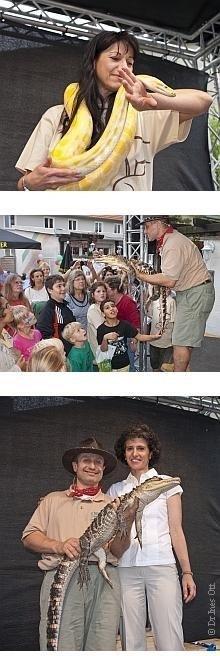 Alligator und Würgeschlangen in der Hanauer Innenstadt |  Tierarztpraxis-Hanau.de