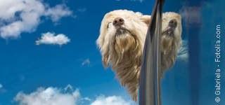 Ein Hund auf dem Weg - Anfahrt zur - Tierarztpraxis Hanau